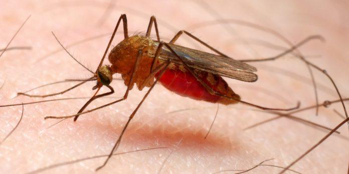 Malaria Bajo Cauca