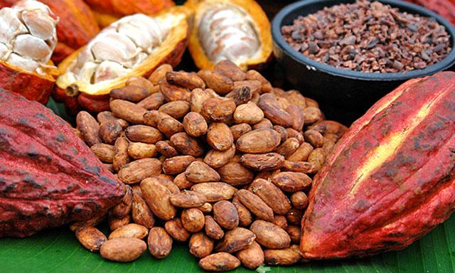 Cacao Nudo de Paramillo