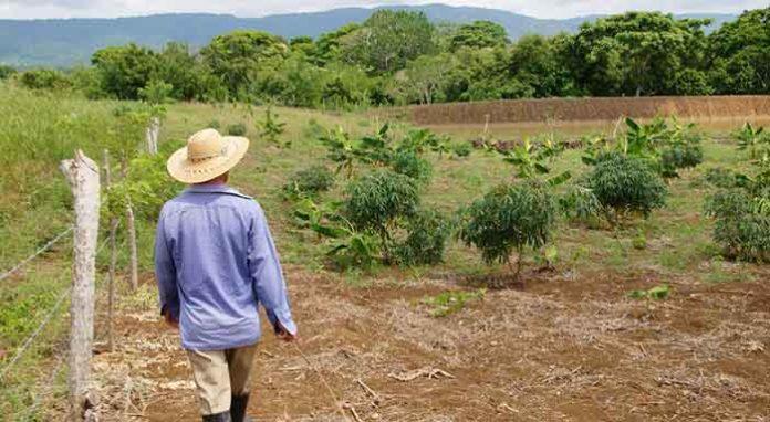 Tierras en Nechí Antioquia